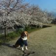 Keitai2_060