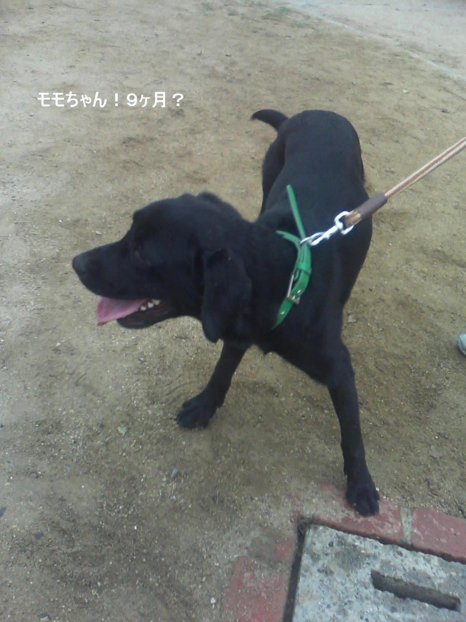 Keitai5_167_2