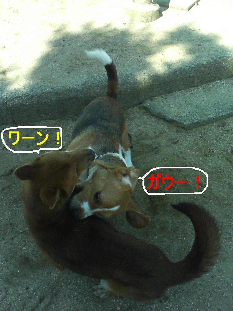 Keitai5_081