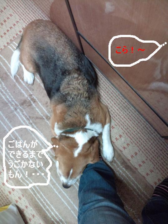 Keitai11_057