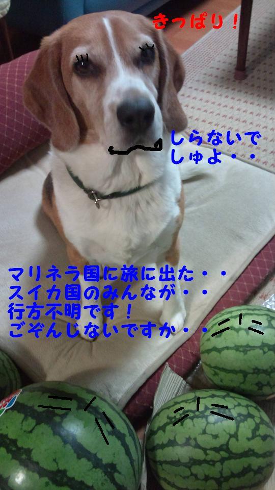 Keitai16_079