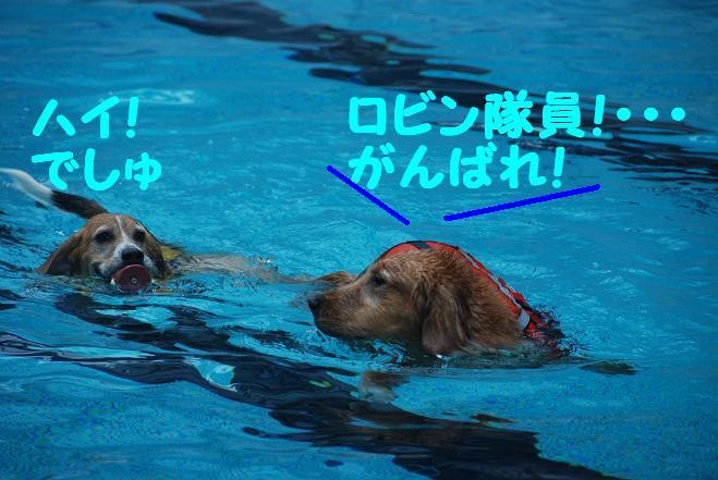 20101020woof_089