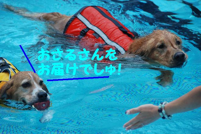 20101020woof_092