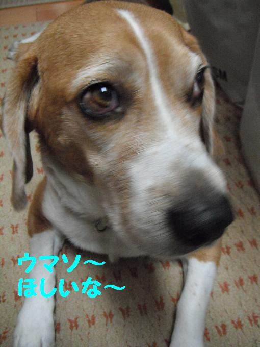 2010110104_099